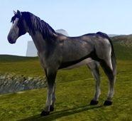 Квест на лошадь в ArcheAge
